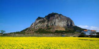 Đảo Jeju điểm đến hấp dẫn tháng 11