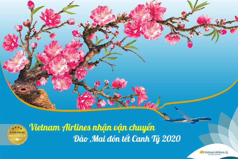 Vietnam Airlines nhận vận chuyển đào, mai đón tết 2020